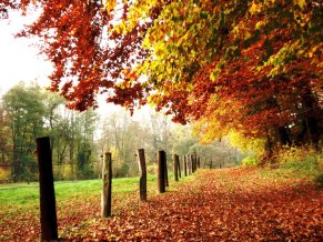 fotos-de-otoño-autumn-photos-arboles-de-colores-1-1