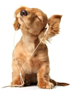music-for-pets