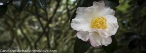 Elizabethan Gardens 2014 10 02 - 0095