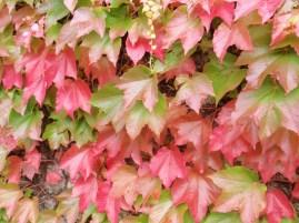 leaves2l