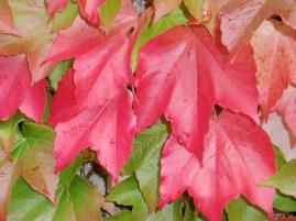 leaves3l