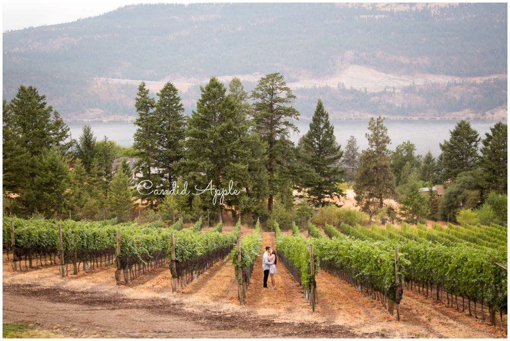 Couple Standing in a Vineyard Kissing