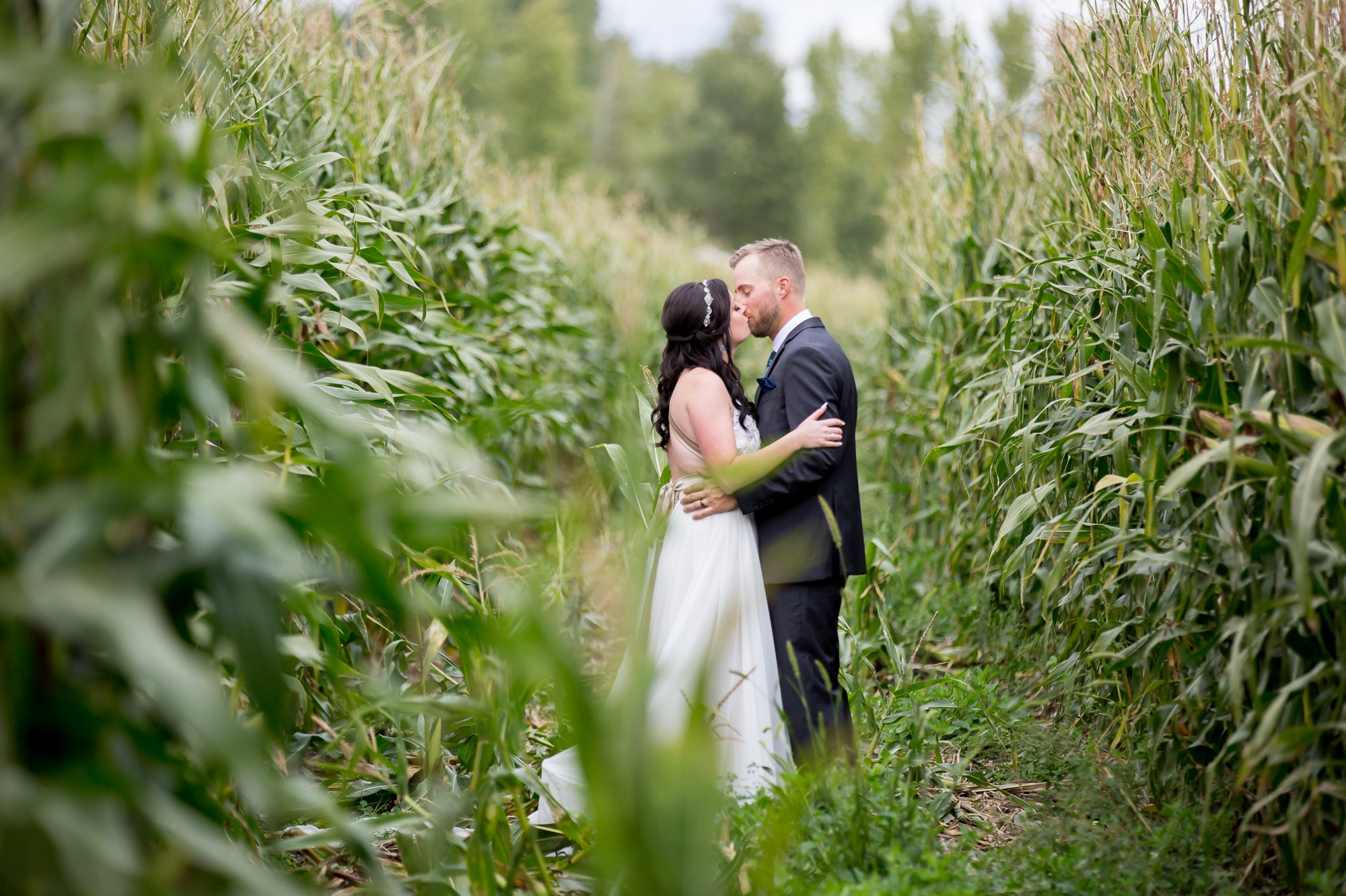 A bride and groom kissing in a corn field