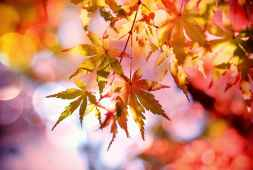 5-tips-for-fall-photography