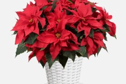 spread-some-cheer-with-plantshed-this-holiday-season