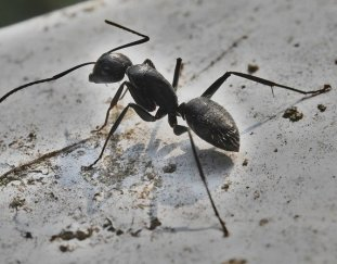 6-pests-that-might-be-hiding-in-your-home-right-now