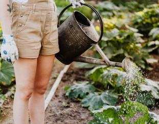 the-right-tools-for-gardening-can-make-all-the-difference