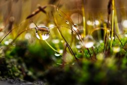 what-causes-waterlogging-in-your-garden-and-what-can-you-do