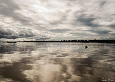Rivière Amazone - Région d'Iquitos