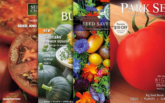 Seed-catalogs-2