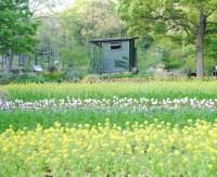 布引ハーブ園の花畑
