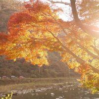 夕日が照らす紅葉 武田尾温泉