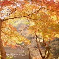 武田尾紅葉公園