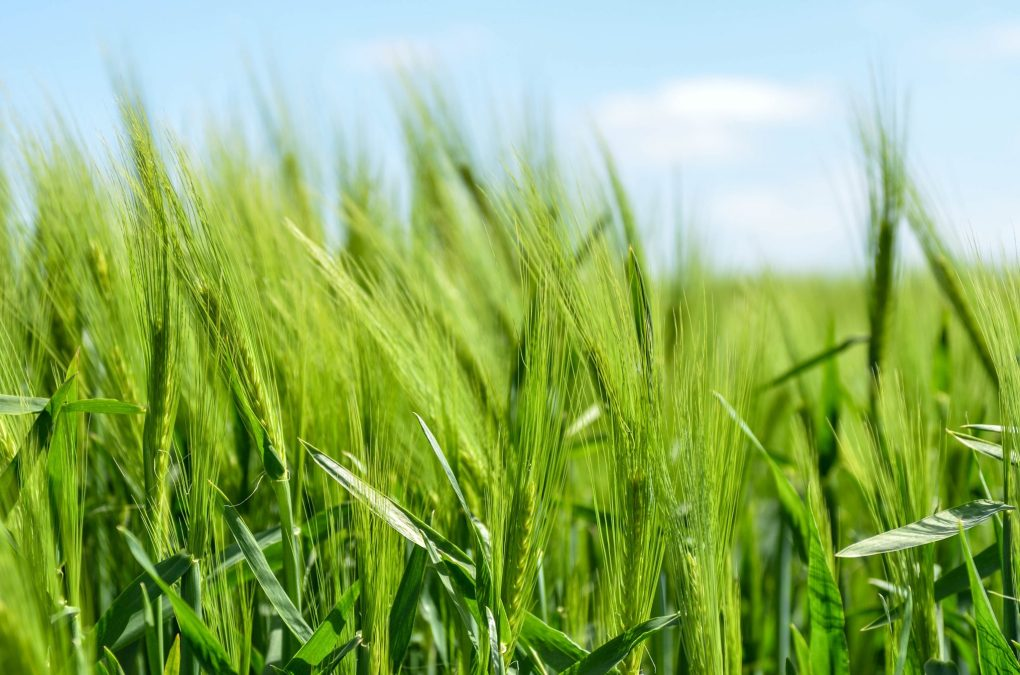 artificial grass, fake grass, benefits of fake grass, home and style