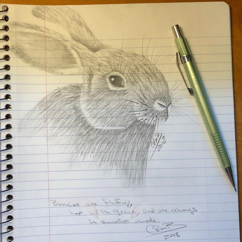 Bunny – Haiku