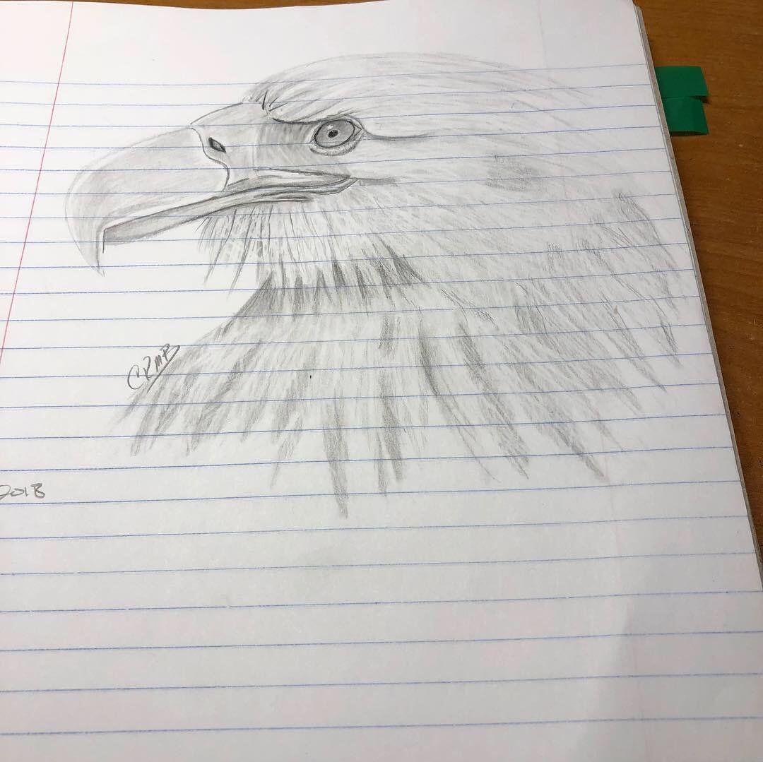 Sketch – Eagle