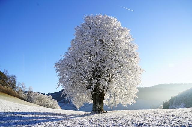 Winter's Grasp – Haiku