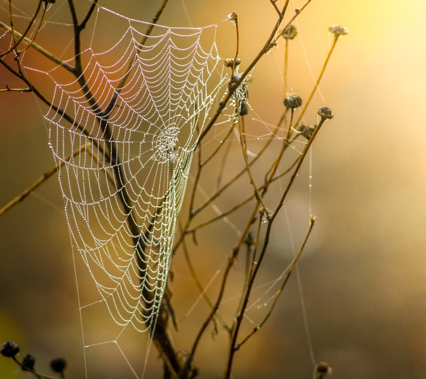 Webbed – Haiku