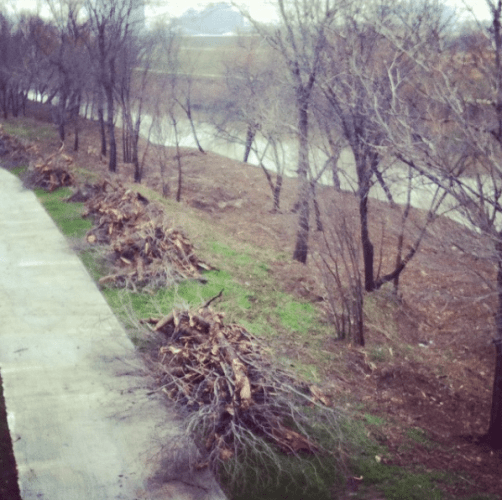 Cleaning out small trees and underbrush, Feb 2015. Taken by Amanda Popken
