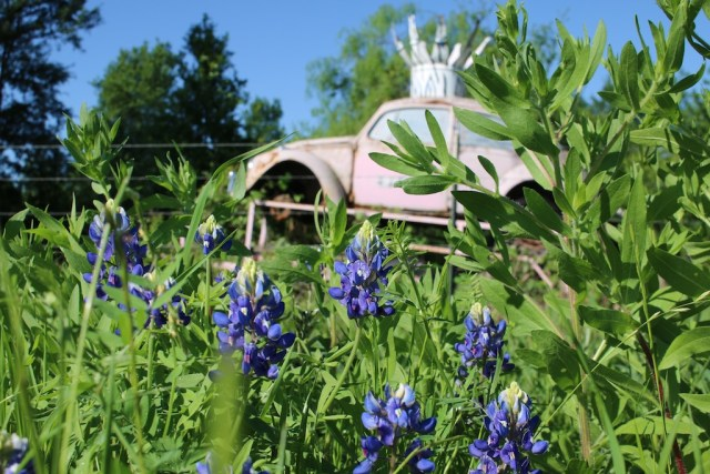 Bluebonnets and car art on the way to Round Top. Photo: Lisa Stewart Photography