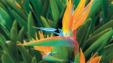 madere-fleur