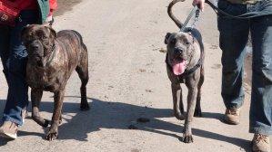 Denny and Millie enjoying a gentle stroll