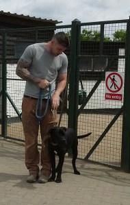 Black Cane Corso training man