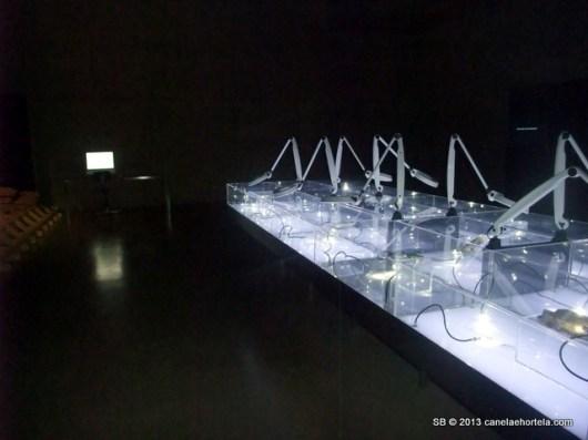 foz_coa_museu_gravuras (3)