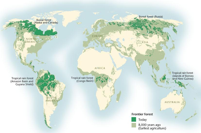Palm oil plantations are one of the biggest threats to these rainforests. Last Stands Mapping The World S Shrinking Forests Canadian Geographic