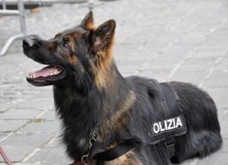 cane polizia di stato