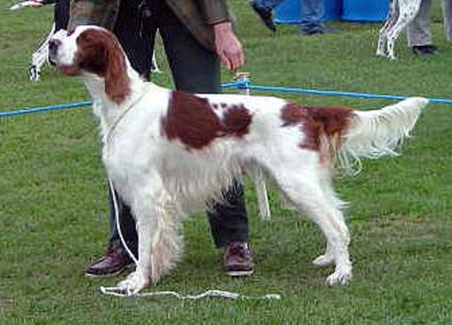 cane da expo