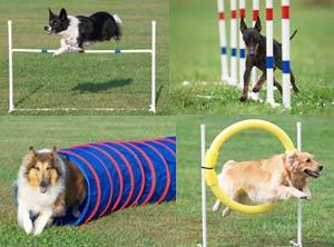 dog-agility1