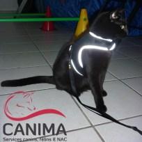 Canima - Fiesta