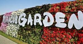Dubai Miracle Garden (38)