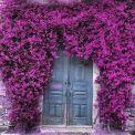Rengarenk çiçekli kapı giriş tasarımları (10)