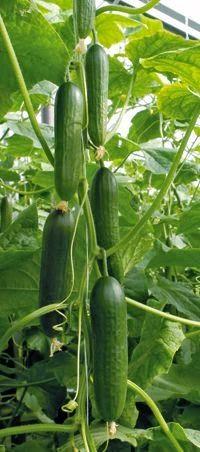 İnanılmaz Bahçe Düzenleme Fikirleri - Kendin yap (2)