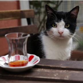 кошка-фото2