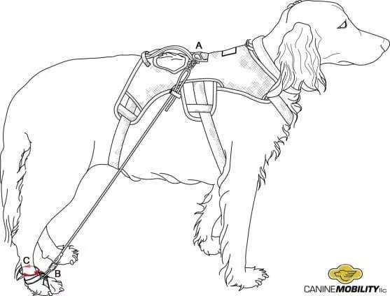 Canine Mobility AKD Best Practice Guidelines