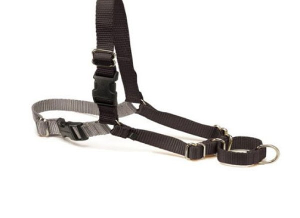 Dog Control Collars To Prevent Dogs Wandering
