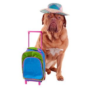 Dog Travel Essentials
