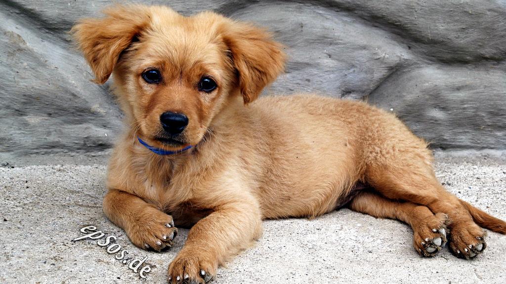 dog-training-certification