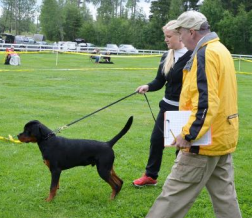 Elementary 1 Dog Training Starting July 18