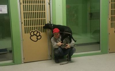 Benefits of Boarding Your Pet at Canine College