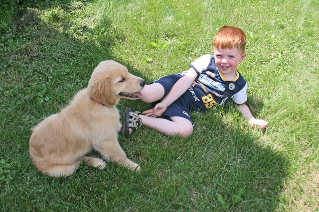 What is The Best Breed of Dog for Kids?