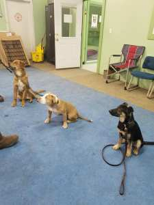 dogs sitting during training course