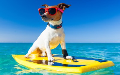 Keeping Your Dog Safe & Cool In The Summer Months