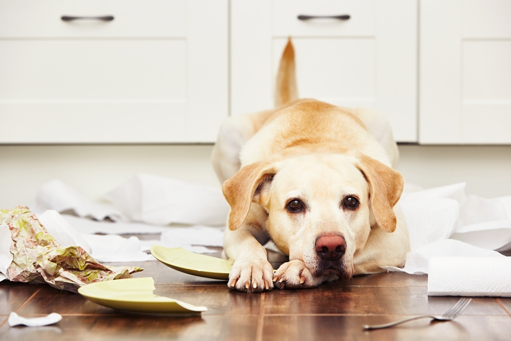 Housekeeping & Cleaning Tips For Dog Owners