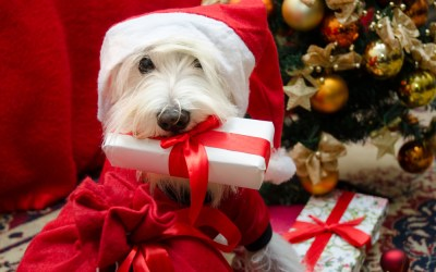 The Best Holiday Gift Ideas for Your Dog