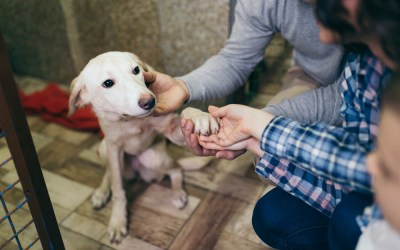 What to Consider Before Adopting a Dog