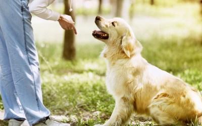 Why Should I Train My Dog?